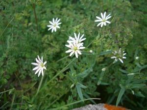 高嶺の花1.jpg