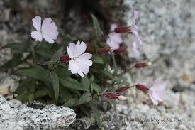 高嶺の花3.jpg
